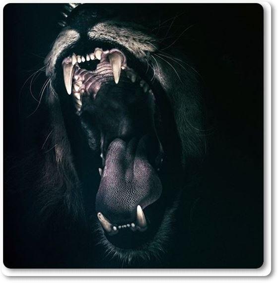El animal más mortal del mundo en casa