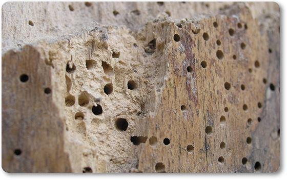 Efectos de la carcoma en la madera