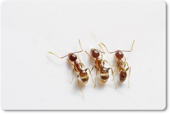 hormigas juntas