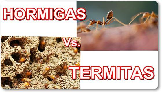hormigas control de termitas