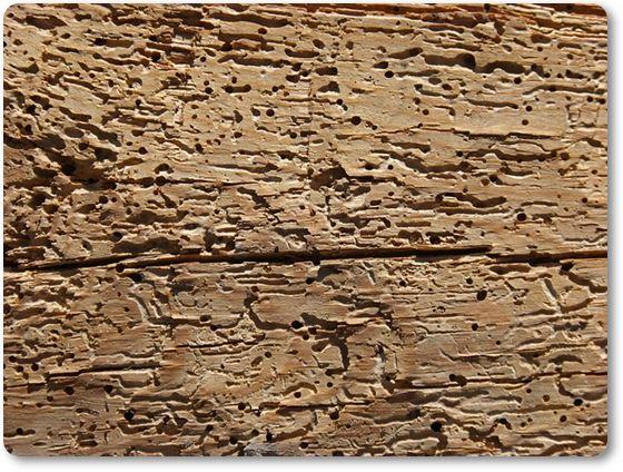 madera con carcoma