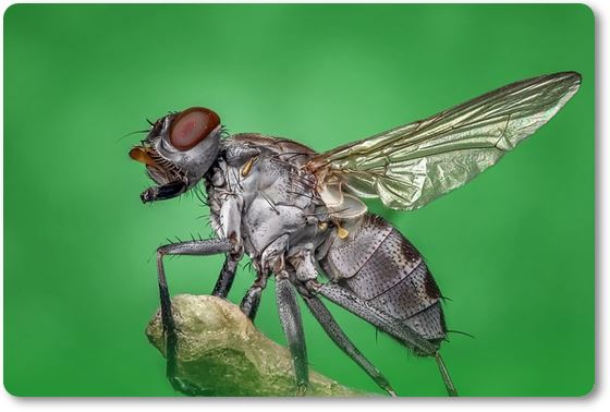 mosca posada