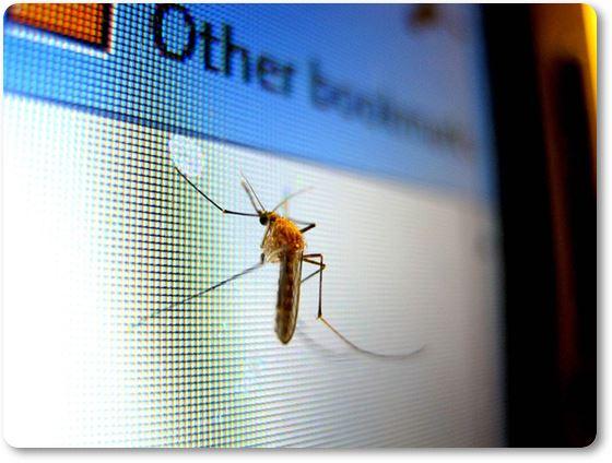 mosquito en la pantalla