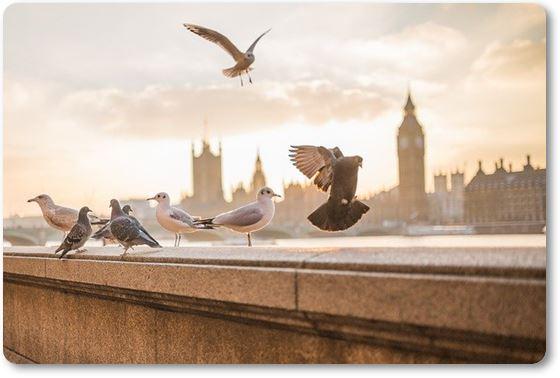 palomas en una azotea
