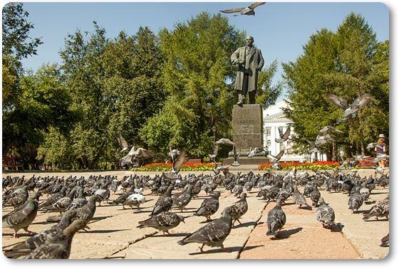 palomas en el parque