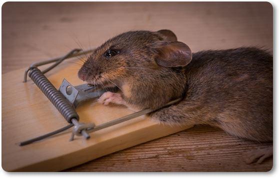 Trampa para ratas y ratones