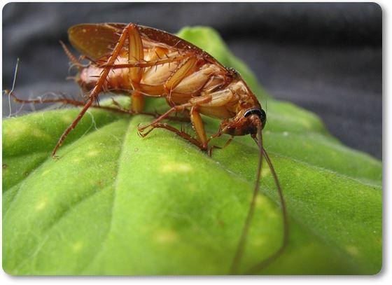 Cucaracha en una hoja