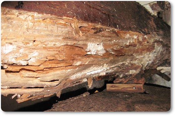 Hongos de la madera en Murcia
